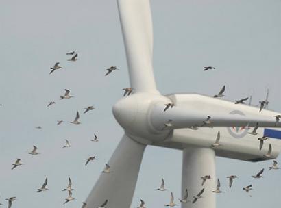 A la asociación eólica no le convencen las aclaraciones del Miteco sobre el impacto del RDL 17/2021 en el sector