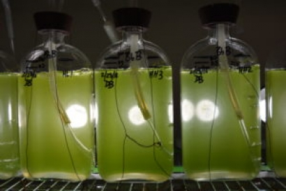Colorado State University Biofuel Project Gets DOE Support