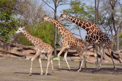 Detroit Zoo to Meet 100% Renewable Energy Goal
