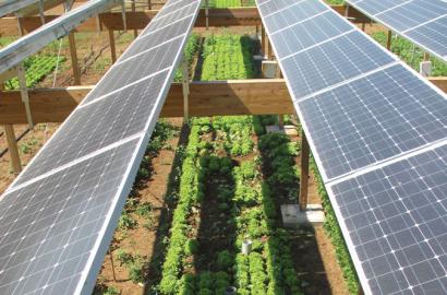 Un sector agroganadero más rentable y resiliente al cambio climático gracias a la fotovoltaica