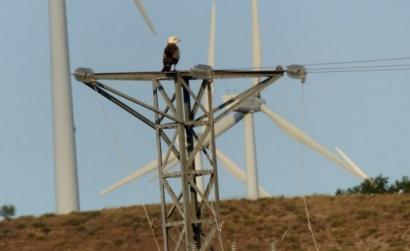 Sí a la moratoria para nuevos parques de energías renovables