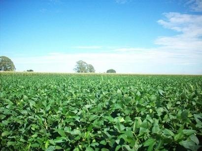 El Departamento de Comercio de Estados Unidos revisa los aranceles al biodiésel argentino