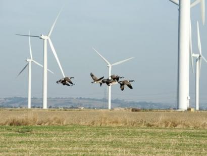 El 86% de las compañías energéticas utiliza modelos de gestión de riesgos orientados a la creación de valor para el accionista