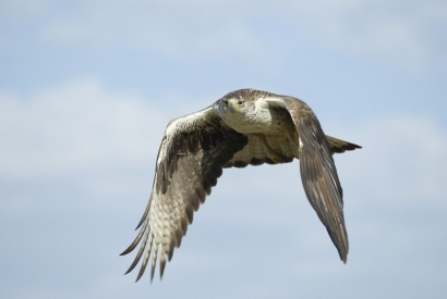 Endesa recibirá 24.500 euros para proteger las aves de sus tendidos eléctricos
