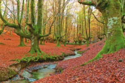 El Parlamento Europeo aprueba que a partir de 2030 la absorción de CO2 por los bosques supere a las emisiones