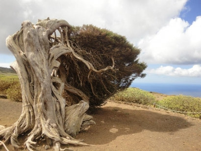 El Gobierno subvenciona con 54,4 millones de euros la instalación de un mínimo de 160 megavatios eólicos en Canarias
