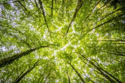 La Cámara de Comercio de Cantabria se alía con la valenciana ClimateTrade para compensar la huella de carbono... en casa