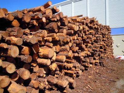 La biomasa podría aumentar un 23% su producción eléctrica sin un megavatio más