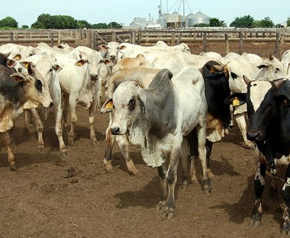 Duke Energy Teams with SustainRNG to Develop Renewable Natural Gas on Dairy Farms