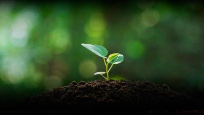Sidenor y Grupo Enhol entran en el frenético mercado del autoconsumo fotovoltaico... y de biogás