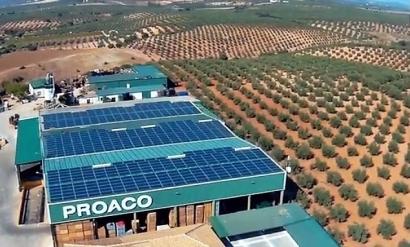 La agrícola Proaco amortizará su cubierta solar de autoconsumo de 200 kilovatios en cinco años