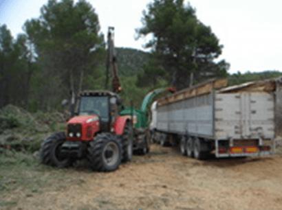 Región de Murcia: clúster y plan para desarrollar la biomasa de origen forestal