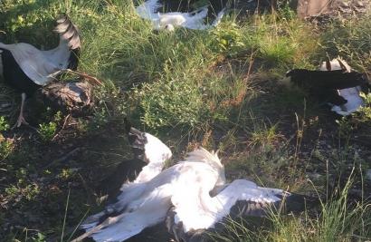 Endesa, en el punto de mira del primer proceso penal abierto por electrocución de avifauna