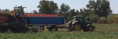 Enertika pondrá en marcha una instalación solar para autoconsumo en la fábrica de tomate frito Solís