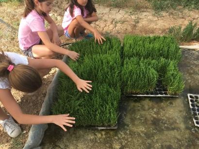 Un nuevo árbol por cada nacimiento en España par frenar el cambio climático