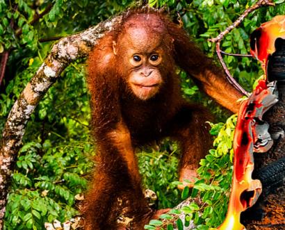 Más de 100 ONG lanzan una campaña para pedir el fin de la deforestación importada en la UE