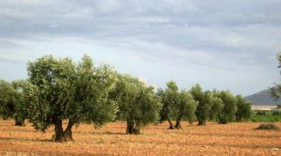 Cómo replantar 25.000 árboles en un día para frenar el cambio climático