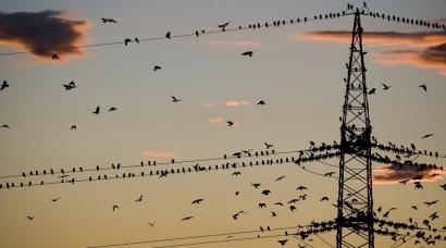 Red Eléctrica redujo en 2018 un 8% sus inversiones en redes