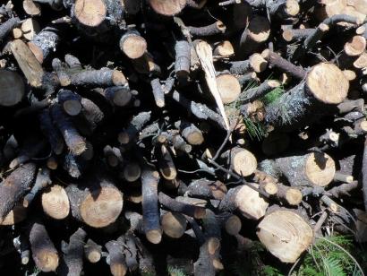 Asturias autoriza la instalación de una planta de biomasa eléctrica