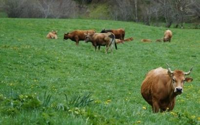 Cambiar el modelo agroalimentario es una de las claves para la supervivencia del planeta
