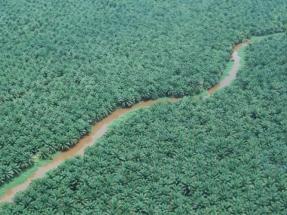 """UICN: """"decir no al aceite de palma desplazaría la pérdida de biodiversidad"""""""