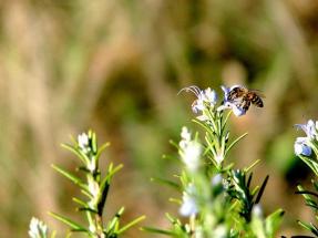 Endesa inicia en Sevilla un proyecto pionero de agrovoltaica y apicultura solar