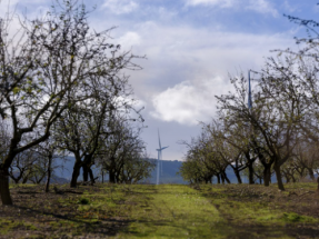 Forestalia se adjudica 778 MW en la subasta y afirma que los precios ofrecidos son competitivos