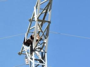 Agentes para la Protección de la Naturaleza de Teruel localizan dos águilas reales electrocutadas