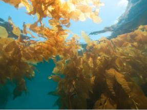 Dos empresas holandesas instalan en el Mar del Norte la primera granja solar de algas marinas
