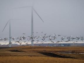 """La Sociedad Española de Ornitología expresa """"profunda inquietud ante el boom que se avecina de las renovables"""""""