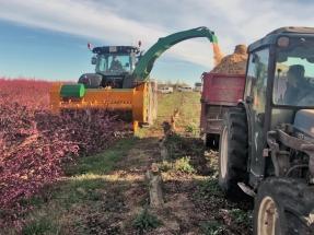 Utilizar los arranques de frutales como biomasa podría calentar tres millones de viviendas en España