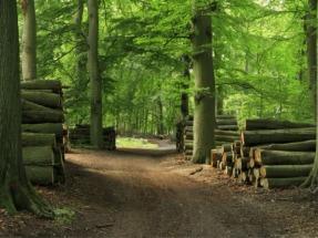 Medio Ambiente subvencionará con 7,8 millones de euros proyectos relacionados con las economías verde y azul