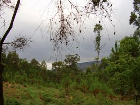 Portugal estudia la creación de una red de parques de tratamiento de biomasa forestal residual