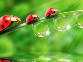 """European Environmental Bureaualerta: ni siquiera el """"crecimiento verde"""" es sostenible"""
