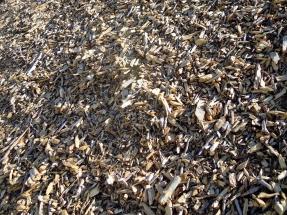 A pesar de las sentencias a su favor, Forestalia para la planta de biomasa de Monzón