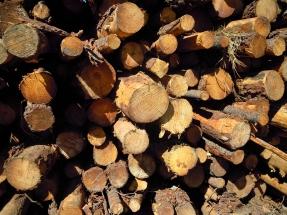 La bioeconomía forestal le hace un hueco a la bioenergía