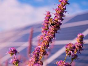 Comparte tu mejor foto solar en la COP26