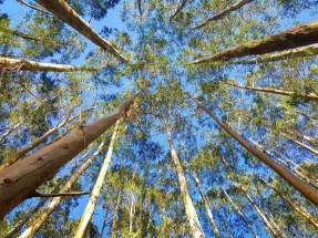 Castilla y León rechaza las alegaciones ecologistas y da vía libre a la planta de Forestalia