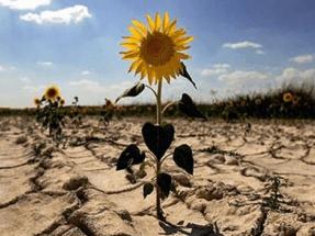Alianza por el Clima considera insuficientes y desequilibradas las jornadas para debatir la Ley de Cambio Climático