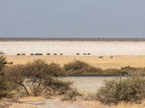 Botswana busca ofertas para construir 200 MW de termosolar