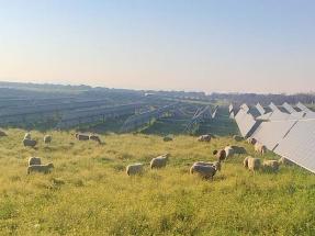 Luz verde para casi 1.000 megavatios fotovoltaicos de Solaria