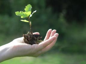 El Climate Leaders Awards premia a la Fundación Renovables y a Ecogestiona
