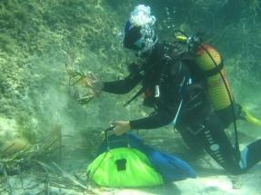 La energía y el medio ambiente marino se citan en Red Eléctrica de España