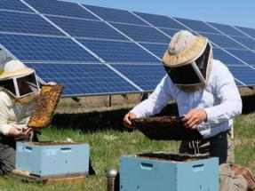 Plantas solares, ¿un salvavidas para las abejas?