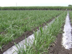 El Gobierno destina 30 M€ a actuaciones de eficiencia energética en explotaciones agropecuarias