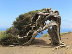 El Ministerio prevé sacar el mes que viene un cupo específico de energía eólica para Canarias