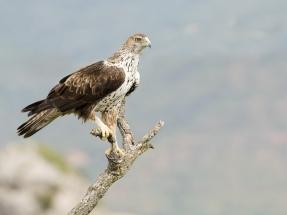 SEO/BirdLife presenta alegaciones a cuatro proyectos de parques eólicos en el Territorio Histórico de Álava