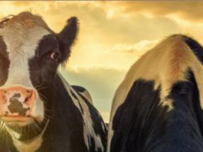 Lactalis y Engie firman el primer acuerdo de compra-venta de energía renovable en el sector lechero español