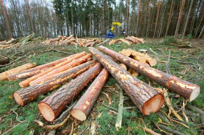 La factura electrónica ahorraría la tala de decenas de árboles y de emisiones en España
