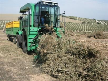 Andalucía ofrece financiación a tres proyectos de biomasa del CTAER